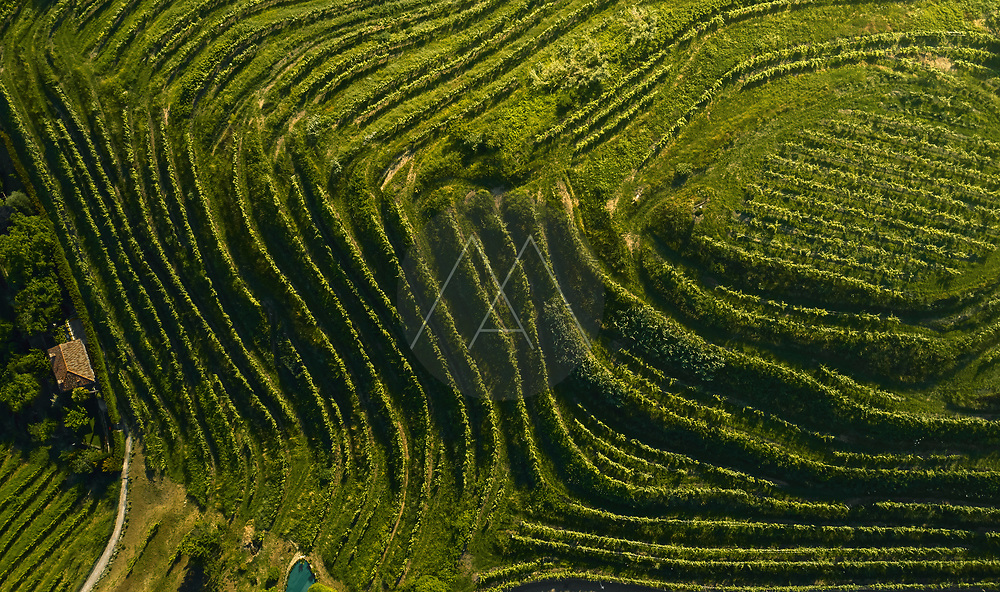 Aerial view of a beautiful terrace vineyard in the Po Valley, Italy.