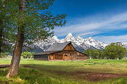 The iconic T.A Moulton Barn still standing proud in a green meadow of early summer with the Grand Tetons towering above with a fresh splash of late season snow.  I love it when I can get the juxtaposition of the season all in one image.