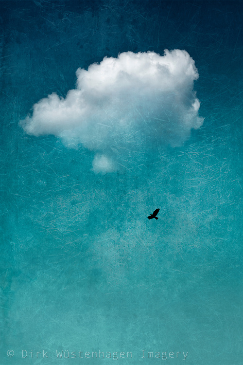 Lone cloud and bird in the sky - Photo illustration
