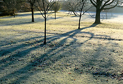 The orchard meadow in winter