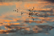 Low cumulus clouds, turned orange by the setting sun, are reflected on the surface of Levee Pond in Fife, Washington.