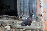 Dog in Gibara, Holguin, Cuba.