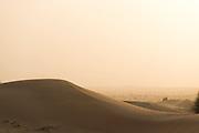 Desert Conservation Area 60km outside of Dubai, United Arab Emirates