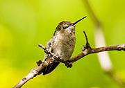 Even Hummingbirds Blink