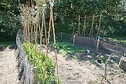 Moestuin - Vegetable garden