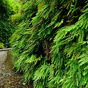Man in Fern Canyon area in the Prairie Creek Redwoods State Park in California