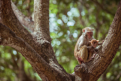 August 9, 2017 - Hainan, Hainan, China - Xinjiang, CHINA-August 9 2017: (EDITORIAL USE ONLY. CHINA OUT) ..Nanwan Monkey Island is a state-protected nature reserve for macaque monkeys in Lingshui county on the south coast of Hainan, the southernmost province of China. While termed an island, the reserve is actually on the Nanwan peninsula bordering the Xincun harbour on the east and south. It is accessible by China's longest over-water cable car from Xincun, spanning 2,138 metres  (Credit Image: © SIPA Asia via ZUMA Wire)