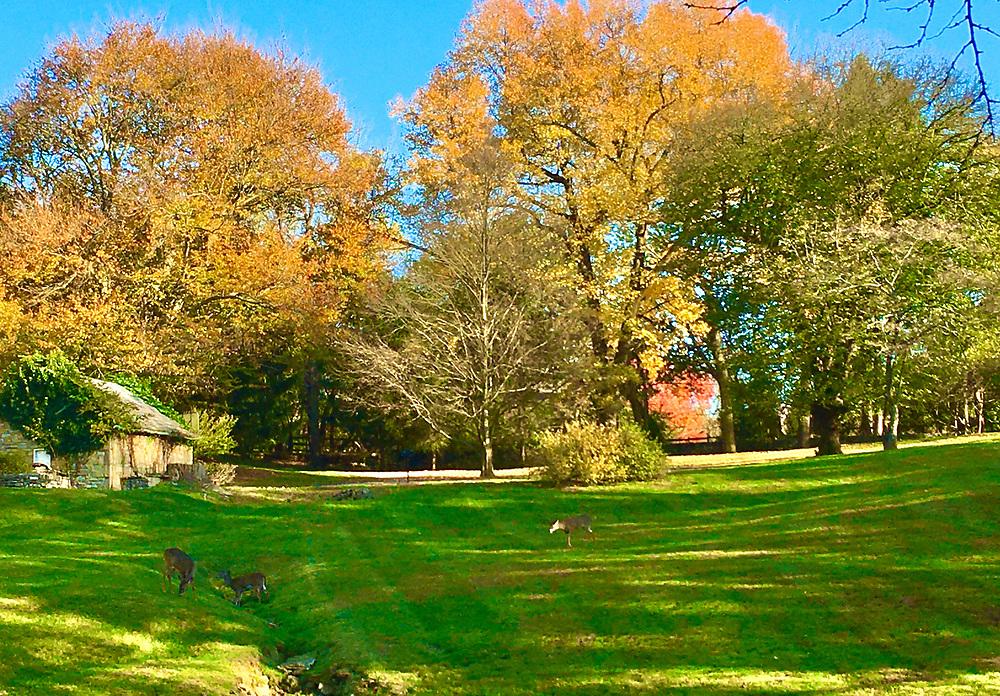 Wyomissing estate and deer, Wyomissing, Berks Co., PA