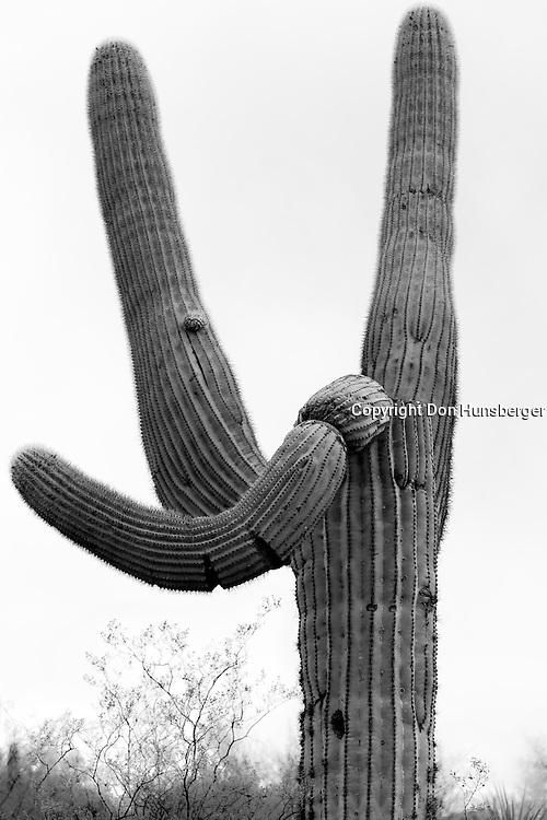Saguaro People - Traffic Cop