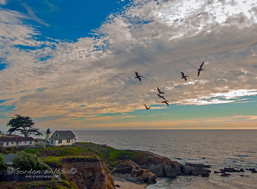 Pelicans fly past Point Montara Lighthouse on the California coast south of San Francisco.