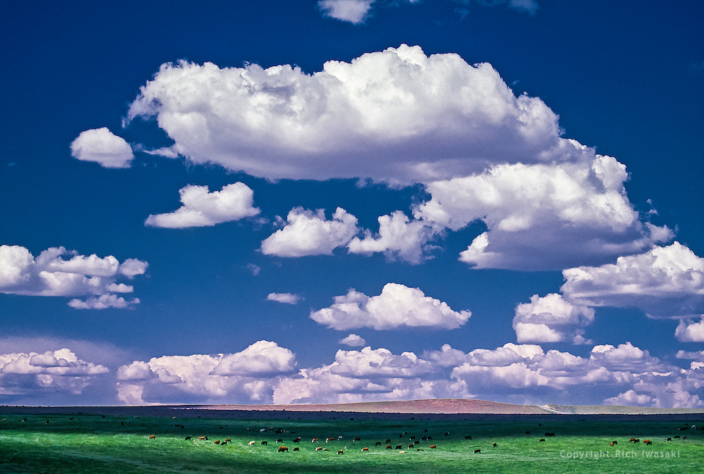 Landscape view of clouds and open field with cattle in central Washington
