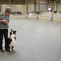 Suzy Walker and her border collie Just me and Ewe wait for their blue ribbon which they won in the obedience competition part of the Bell County Kennel Club Obedience Trials Friday afternoon at the Bell County Expo Center.