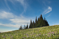 Alpine meadows, Mount Baker Wilderness Washington