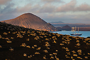 Overlooking a hillside of tequila plants, the M/S Mary Anne sailboat sits in Sullivan Bay, Bartolome Island, Galapagos Islands, Ecuador