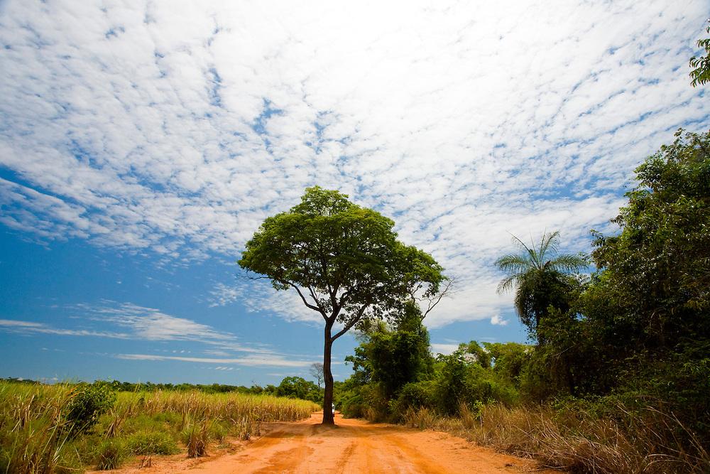 Sao Jose do Rio Preto_SP, Brasil...Programa Biota da Unesp, na foto estrada de terra...The Biota program of Unesp, in this photo a dirt road.. .Foto: JOAO MARCOS ROSA /  NITRO