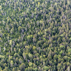 Above the working forest of Reed Plantation in Reed, Maine.
