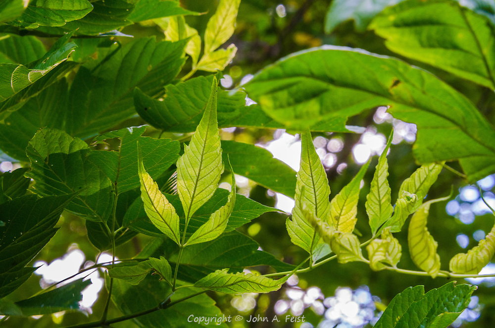 I can't say that there is anything special about these leaves.  they just give a feeling of lightness and calm