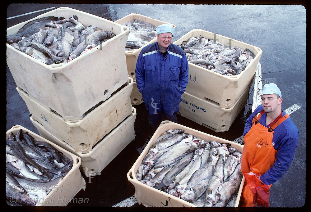 Two longshoremen pose next to bins of cod just loaded off fishing boat in downtown Reykjavik. Iceland