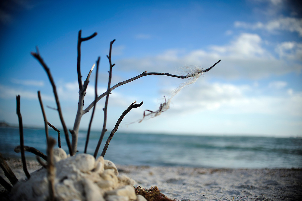 Photo by Matt Roth..Treasure Island Tuesday, December 20, 2011.