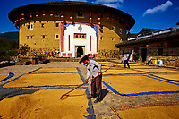 """Chine, Province du Fujian, village de Huaiyuan Lou, maison forteresse en terre et en bois où logent les membres d'une meme famille de l'ethnie Hakka, inscrit au patrimoine mondial de l'Unesco, sechage du riz // China, Fujian province, Huaiyuan Lou village, Tulou mud house. well known as the Hakka Tulou region, in Fujian. In 2008, UNESCO granted the Tulou """"Apartments"""" World Heritage Status, siting the buildings as exceptional examples of a building tradition and function exemplifying a particular type of communal living and defensive organization. The Fujian Tulou is """"the most extraordinary type of Chinese rural dwellings"""" of the Hakka minority group and other people in the mountainous areas in southwestern Fujian, drying rice"""