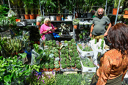 © Licensed to London News Pictures. 05/07/2020. LONDON, UK.  A seller of succulents and cacti at Columbia Road Flower Market in East London on the its reopening after certain coronavirus pandemic lockdown restrictions were relaxed by the UK government.  Photo credit: Stephen Chung/LNP
