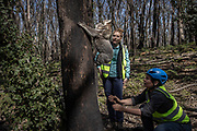 Dr. Kellie Leigh (R) and Dr. Victoria Inman release a koala mother and her joey back into habitat damaged by wildfire, after their research team captured them to conduct maintenance on a radio collar and health assessments, in Kanangra-Boyd National Park, Australia, September 15, 2020. The capture was part of a population monitoring program spearheaded to plan for koala recovery in the region.