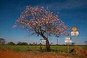 Uberaba_MG, Brasil...Arvore as margens da BR 262 em Uberaba, Minas Gerais...A tree next to the highway BR 262 in Uberaba, Minas Gerais...Foto: LEO DRUMOND / NITRO