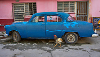 Havana Walkabout - Wildlife. Image taken with a Leica T camera and 23 mm f/2 lens.