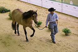 Wellington Teixeira, (BRA), SJ Rodopio - Horse Inspection Reining  - Alltech FEI World Equestrian Games™ 2014 - Normandy, France.<br /> © Hippo Foto Team - Dirk Caremans<br /> 25/06/14