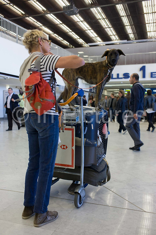 Pet dog rides on top of an airline animal cargo box in the main terminal of Paris Orly airport. Perched on top of the animal transport container, the dog looks attentive and interested either before or after its flight from or to, the Paris airport, being wheeled on a baggage trolley. Other passengers walk past in the terminal. Animals have been transported by air since the early 1930's. In today's modern world, carriage of live animals by air is considered the most humane and expedient method of transportation over long distances. ATA's Live Animals Regulations (LAR) is the worldwide standard for transporting live animals by commercial airlines.