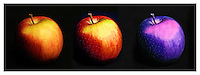 Apple, fruit, fall, Still Life - Landscape photographer located south of Boston in Walpole MA.