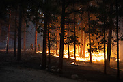Larimer County Sheriff's Office firefighters burn out fuels adjacent to structures to protect them from the East Troublesome Fire in Rocky Mountain National Park, October 24, 2020. © 2020 William A. Cotton