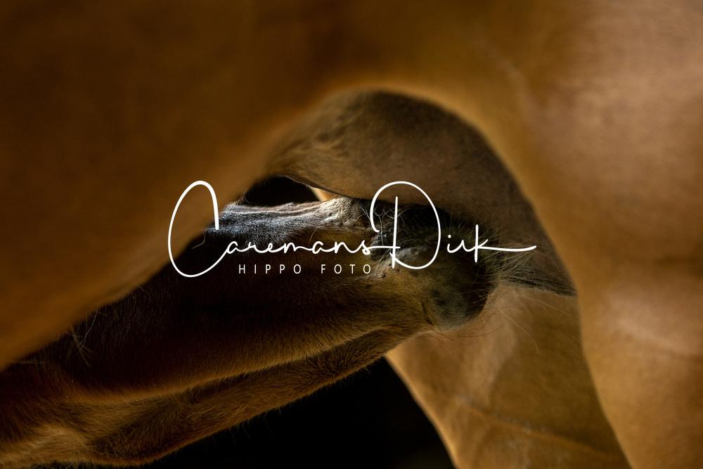 Vins CD, O SO Lucky CD<br /> Wachtebeke 2021<br /> © Hippo Foto - Dirk Caremans<br /> 13/05/2021