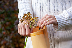 Collecting agapanthus seed into a paper bag