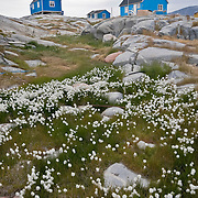Colorful buildings in Qeqertarsuaq, Greenland.