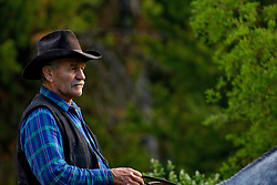cowboys, Alpine, WyomingJ.P. Robinson, a rancher from Freedom Idaho driving cows in the Wyoming Range.