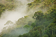 Clouds slowly rise as morning light strikes the hillsides of the cloud forest on the eastern foothills of the Andes, between the Puna highlands and the lower Amazon Basin, Peru on September 3, 2005.