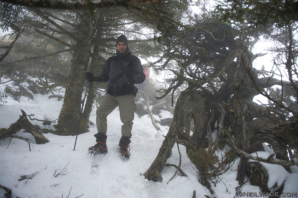 There were a lot of forests similar to this one, with small pine trees and junipers to climb over and under.