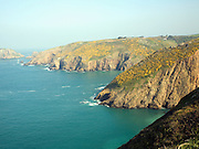 Cliffs with yellow flowers of common gorse bush, Island of Sark, Channel Islands, Great Britai