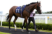 The Lacemaker ridden by Darragh Keenan and trained by Milton Harris - Mandatory by-line: Robbie Stephenson/JMP - 18/07/2020 - HORSE RACING- Bath Racecourse - Bath, England - Bath Races 18/07/20