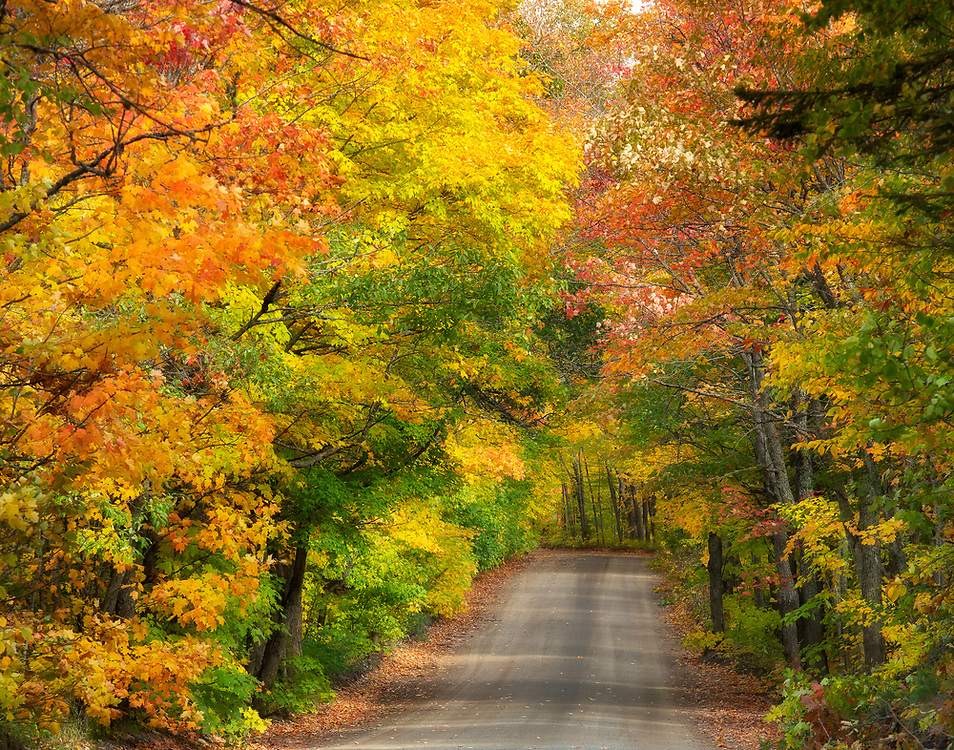 """Autumn Tree Tunnel in Marquette, MI <br /> <br /> 14"""" x 11"""" lustre print<br /> <br /> See pricing page for more information.<br /> <br /> Please contact me for custom sizes and print options including canvas wraps, metal prints, assorted paper options, etc. <br /> <br /> I enjoy working with buyers to help them with all their home and commercial wall art needs."""