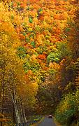 Autumn foliage, road, Hyner View State Park, Clinton Co., PA