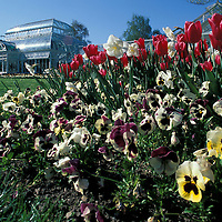 USA, Washington, Seattle, Flowers bloom outside Conservatory building in Volunteer Park in Capitol Hill neighborhood