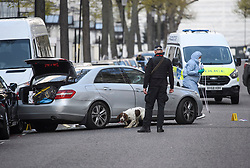 © Licensed to London News Pictures. 13/04/2019. London, UK. A police sniffer dog is used to search a car at the scene in Holland Park after shots were fired near the Ukrainian embassy. Photo credit: Ben Cawthra/LNP