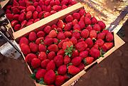 Strawberries, Waimea, Island of Hawaii<br />