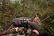 "Offroading through the bush searching for a leopard with a radio collar, in a safari land cruiser in the Phinda Game Reserve. <br /> <br /> Phinda Private Game Reserve encompasses an impressive 23 000 hectares (56 800 acres) of prime conservation land wilderness in KwaZulu-Natal, South Africa. Showcasing one of the continent's finest game viewing experiences. Phinda is described as ""Seven Worlds of Wonder"", with its seven distinct habitats - a magnificent tapestry of woodland, grassland, wetland and forest, interspersed with mountain ranges, river courses, marshes and pans. Phinda is a wilderness sanctuary where intimate encounters, adventure and rare discoveries can be experienced firsthand."