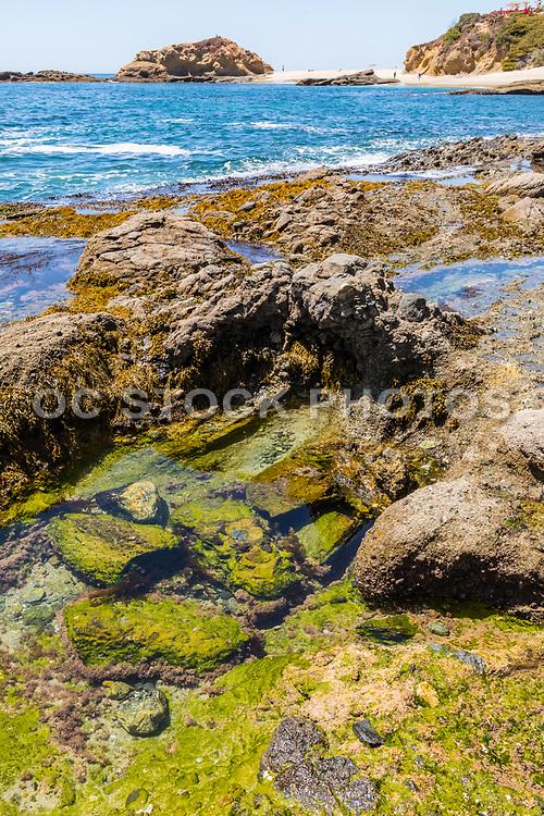 Laguna Beach Tide Pools at Montage Resort