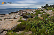 Schoodic Point in Acadia National Park, Maine, USA