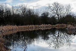 Reflections of trees and hedges along the towpath of the disused canal arm, Foxton Locks, Grand Union Canal, Leicestershire, England.