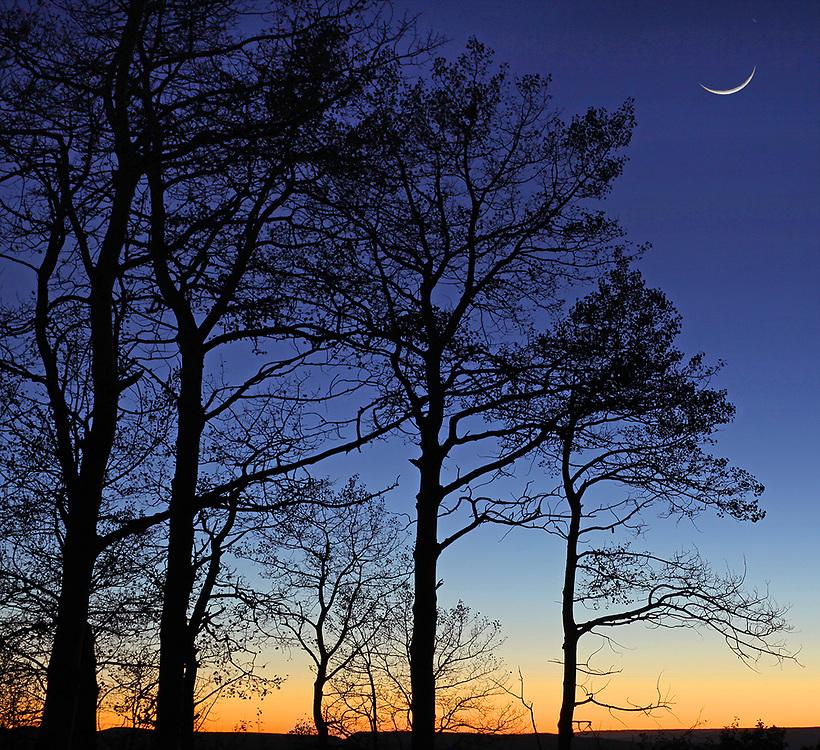 Twighlight Tree Silhouette